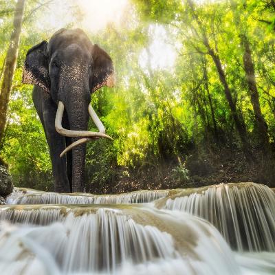 فيل للكبار