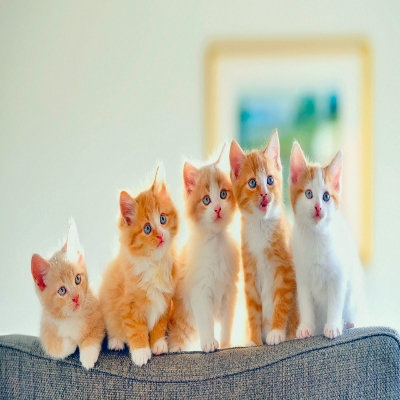 مجموعة قطط