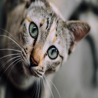 القطة اللطيفة